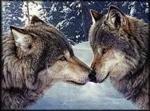 wolfbeauty83